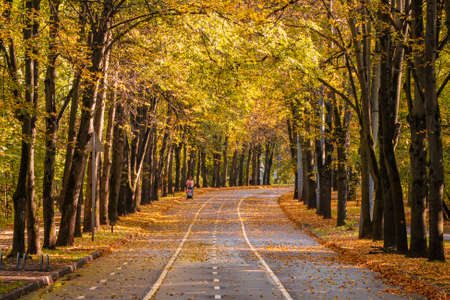 Autumn winding alley with a silhouette of a walking mother with a baby carriage. Moscow. Sokolniki Park.