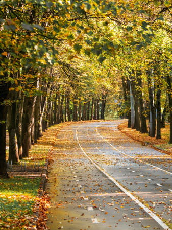 Empty autumn road with trees on the edges and white markings on the asphalt. Sokolniki Park, Moscow.