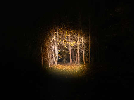 Dark forest with a lantern. Illuminated trees at night, Scary forest scene. Tree silhouettes in the dark. Stock fotó