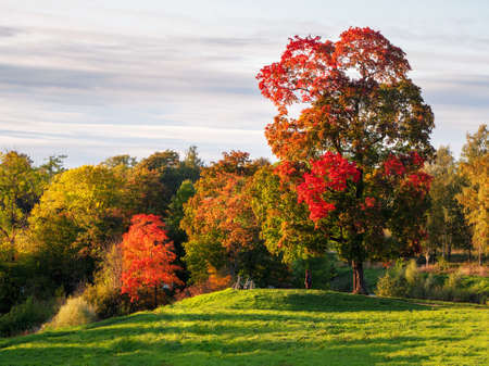 Beautiful autumn landscape with red trees in a hill. Standard-Bild