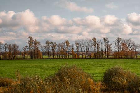 Tree line in the field
