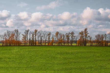 A straight line of trees in an autumn field Zdjęcie Seryjne