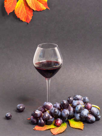 Glass of red wine and bunch of red grapes on the dark background.