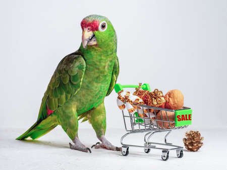 Big green parrot and a small cart with gifts and marked