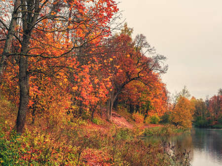 Autumn tree by the pond. Morning autumn landscape with red trees by the lake.