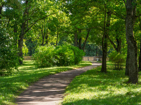 Green sunny park, atmospheric landscape of majestic nature. Russia.