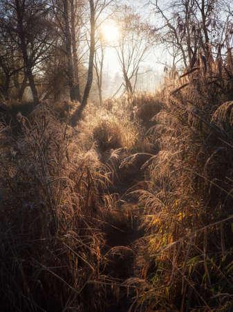 Morning sunny misty path through the tall grass.