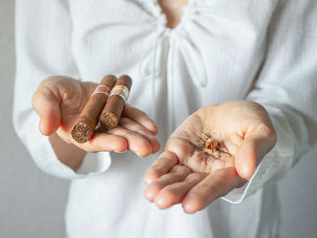 Tobacco seeds and a cigar in the palm of your hand. Extremes creative concept