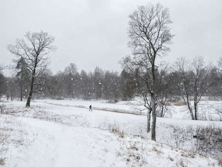 Winter park. Beautiful snow landscape with the figure of a man walking in the Park. 版權商用圖片