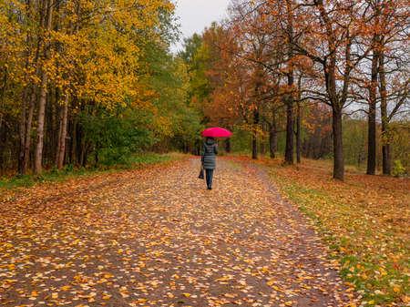 A woman with a red umbrella walks through the autumn park alone 版權商用圖片