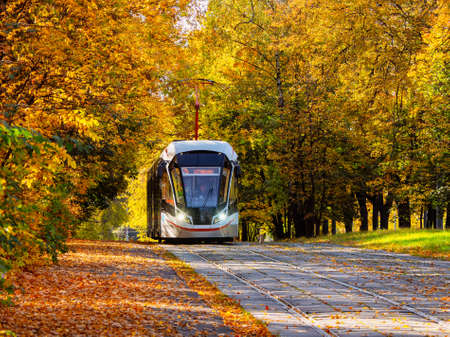 Tram rails in the corridor of the yellow autumn trees in Moscow.