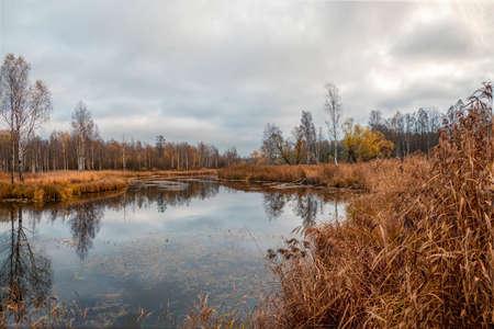 Swamp in the North in autumn 版權商用圖片