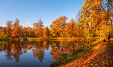 Sunny autumn public park with golden trees over a pond and people walking around. Tsarskoe Selo. Russia.