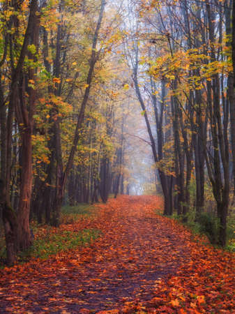Maple alley with fallen leaves through a mystical forest. Fabulous autumn misty landscape. Vertical view.