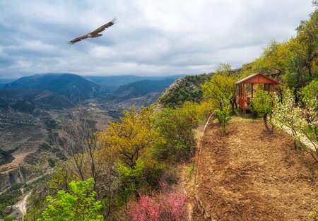 A flowery garden on a mountain terrace. Wooden gazebo in the alpine garden in spring.