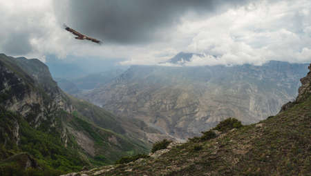 Dramatic mountain scenery with river in valley among motley rocks under cloudy sky. Scenic caucasian green landscape with mountain river in deep gorge under overcast sky with flying eagle.