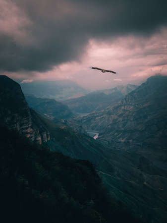 Eagle over the dark canyon. Travel all over the world. Vertical view.