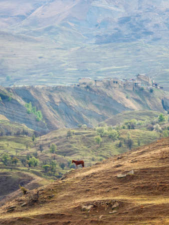 Texture of a mountain slope. Steep mountain slope with grazing cow. Green highland pasture. Mountain terraces.