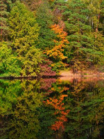 A walk in the sunny autumn park. Bright sunny autumn landscape in Alexander Park, Tsarskoe Selo. Russia. Фото со стока