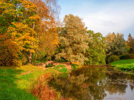 Yellow maple tree on a bright natural sunny autumn background. Фото со стока