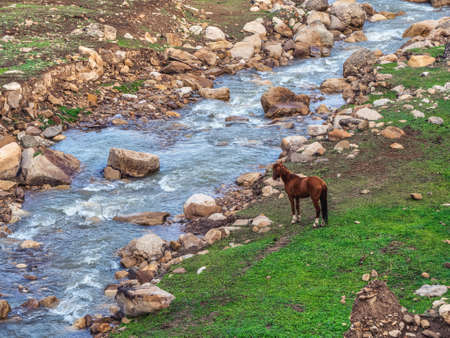 Red horse on the bank of a mountain river. Fast mountain river. Cutting through a mountain river in a green valley. Фото со стока