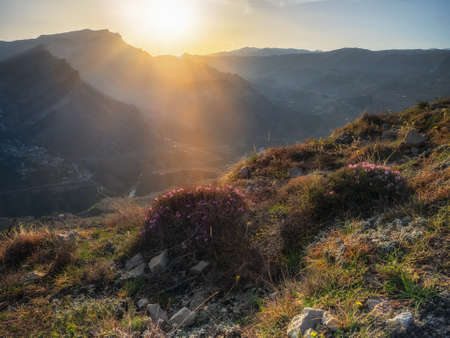 Soft focus. Evening in the mountains. Sunset rays of the sun fall on the mountain slopes covered with wild flowering bushes.