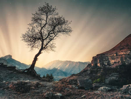 Magical sunrise in the mountains. The silhouette of a lone tree against the background of the sunset. Фото со стока