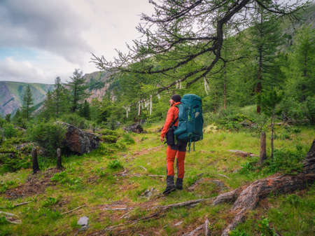 Happy male tourist with a large backpack in a green mountain forest passes by a large tree with symbolic ribbons. Фото со стока