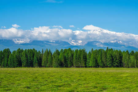 Snags of bizarre shape on a green lawn. Giant mountains with snow above green forest in sunny day. Glacier under blue sky. Amazing snowy mountain landscape of majestic nature.