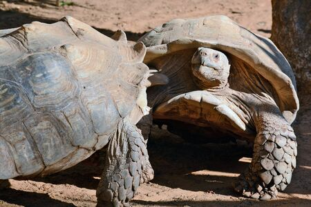 rival rivals rivalry season: struggle between the two turtles in a national park in Ramat Gan, Israel