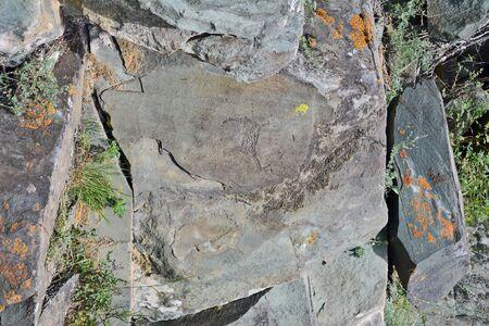 altai: ancient petroglyphs found on the site Kalbak-Tash in the Altai Mountains