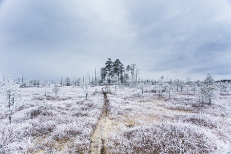 Hoarfrost in the bog at winter time in the Belarus Stock fotó