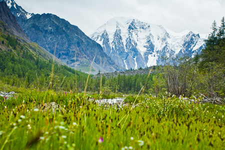 Beautifull  valley with view to snow mountains and green plants in Altaj, Russia  at the summer