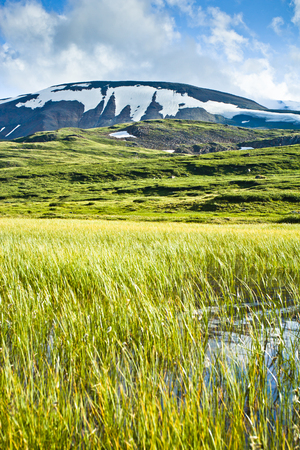 Beautifull  valley with view to snow mountains and plants in the lake in Altaj, Russia  at the summer Reklamní fotografie