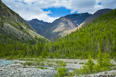 Beautifull  valley with view to snow mountains, forest and river in Altaj, Russia  at the summer