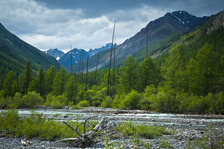 Beautifull  valley with view to snow mountains ,forest and river in Altaj, Russia  at the summer Stockfoto