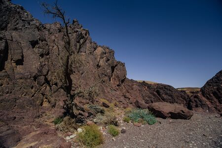 Way to Red canyon  in the Israil in sunny day with dry tree and blue sky near Eilat with sunlights