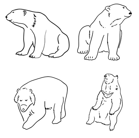 looking away: Set of drawings of grizzly bears and white white