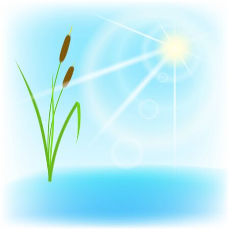 Cane, lake and sun with lens flare Stock Vector - 18085527