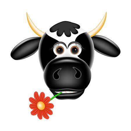 cow teeth: Funny cow with a flower in teeth  Vector illustration