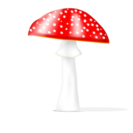 a fly agaric: Realistic fly agaric isolated on the white illustration