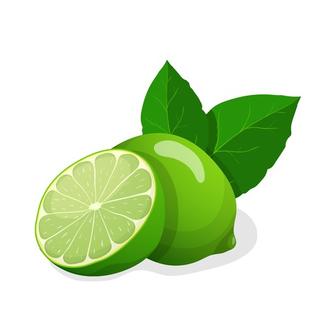 illustration of fresh limes
