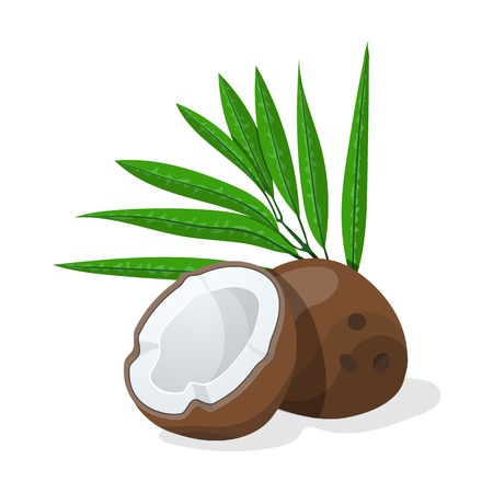 Coconuts with leaves.  Vector