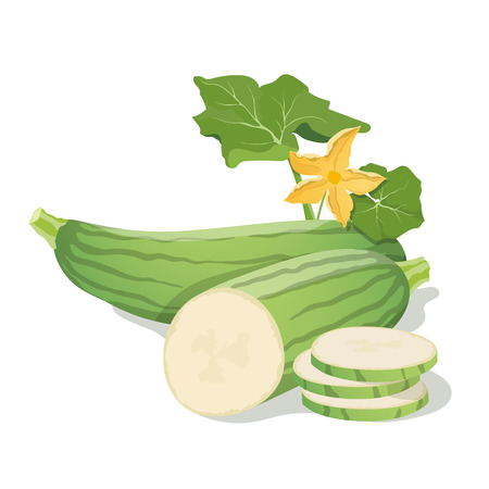 marrow: Marrow vegetables. Vector illustration.