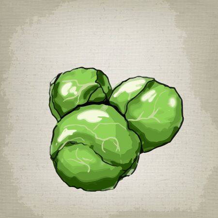 ravizzone: Brussels sprouts. Vector illustration