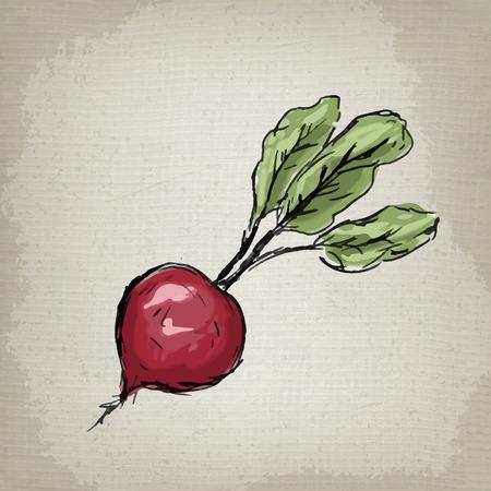 Beet vector illustration Stock Illustratie