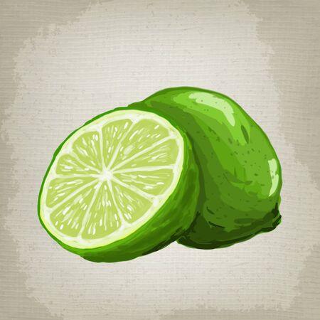 fruited: Vector illustration of fresh limes