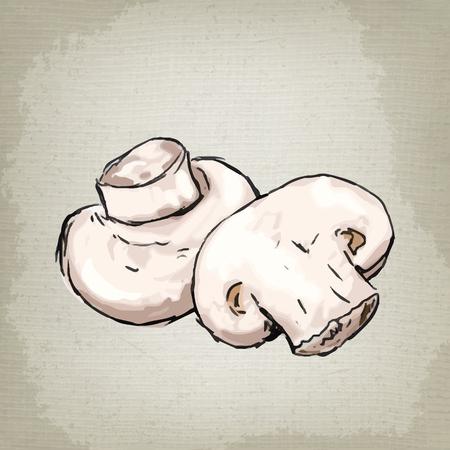 mycology: Vector illustration of mushrooms champignons