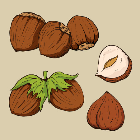 Hazelnuts in hand-drawn style. Vector illustration. Çizim