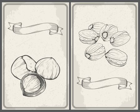 filberts: Set of nuts: Hazelnuts and Pistachios. Hand drawn sketches vector illustration in vintage style. Illustration